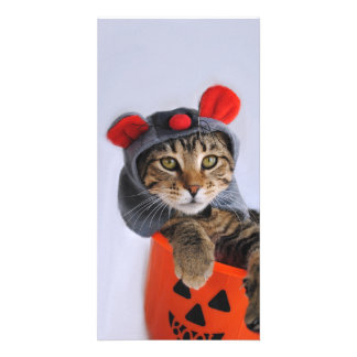 Tabby Cat In Mouse Costume Photo Cards
