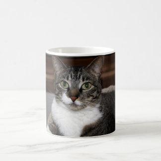 Tabby Cat Looking at You Classic White Coffee Mug