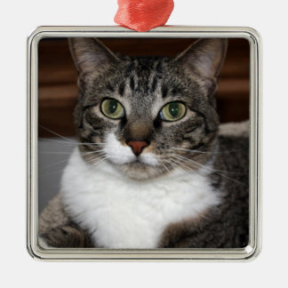 Tabby Cat Looking at You Photo Christmas Ornament