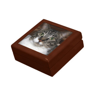 Tabby Cat Looking at You Photo Gift Box
