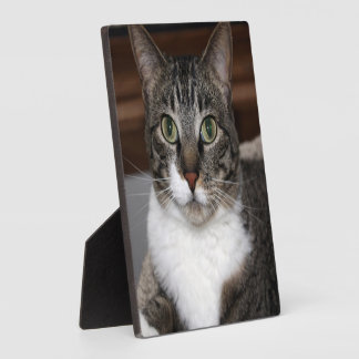 Tabby Cat Looking at You Photo Plaque