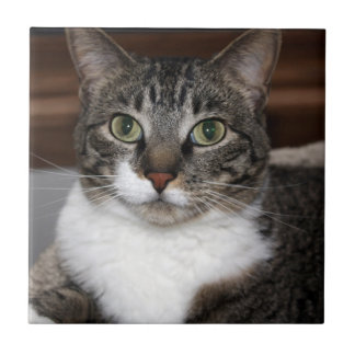 Tabby Cat Looking at You Small Square Tile