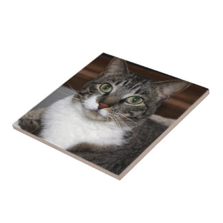 Tabby Cat Looking at You Tile