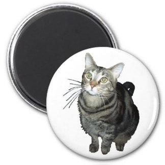Tabby cat magnet