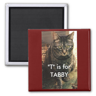 Tabby Cat Magnet Maroon background