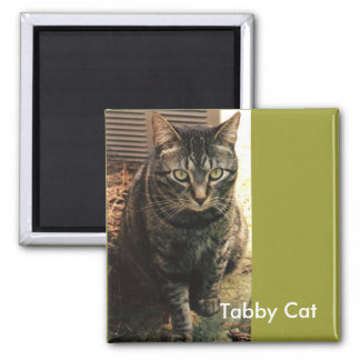Tabby Cat Magnet retro green