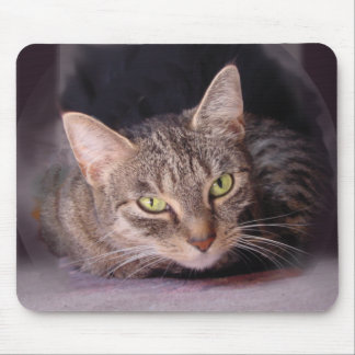 Tabby Cat Mouse Pads