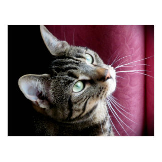 Tabby cat  Note card