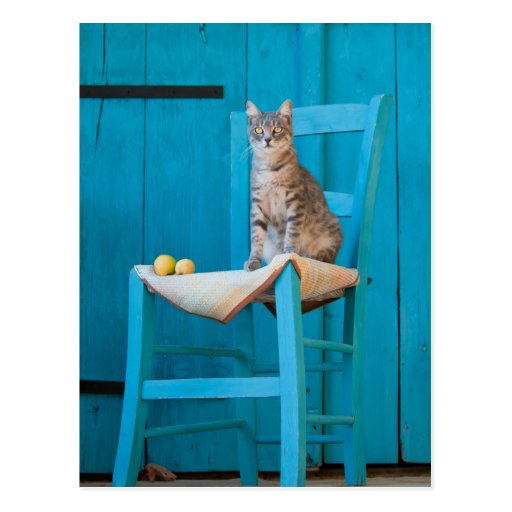 Tabby cat on a blue chair in front a blue door postcard
