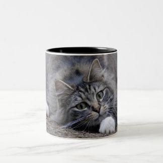 Tabby Cat on Altert Two-Tone Coffee Mug