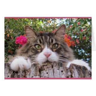 Tabby Cat On Tree Stump With Bougainvillea Card