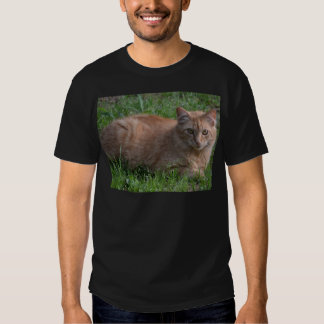Tabby cat orange t-shirts