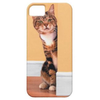 Tabby cat peeking around wall case for the iPhone 5