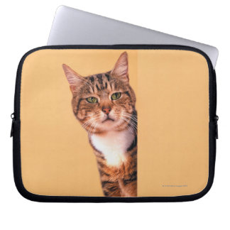 Tabby cat peeking around wall laptop sleeve