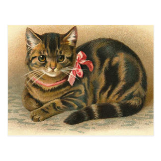 """Tabby Cat"" Postcard"