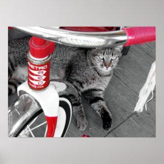 Tabby Cat Poster
