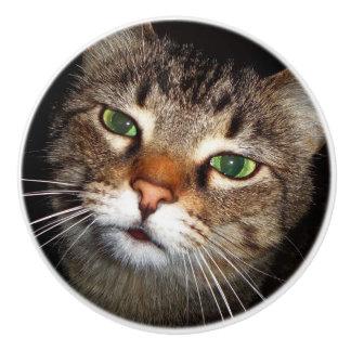 Tabby Cat Pull