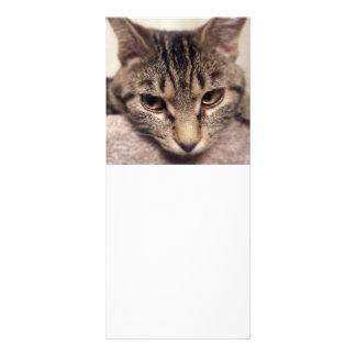 Tabby Cat Rack Card Design