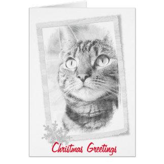 Tabby Cat Sketch Christmas Card