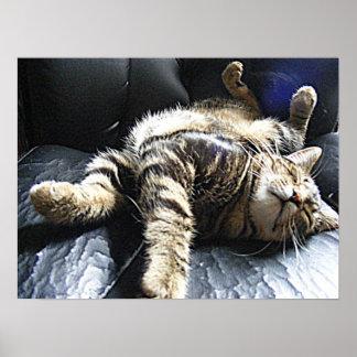 Tabby Cat Sleeps Poster