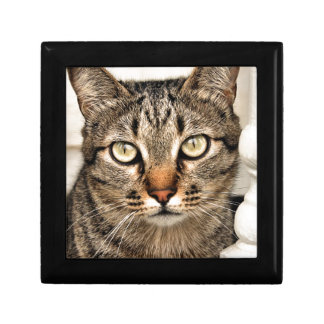 Tabby Cat Small Square Gift Box
