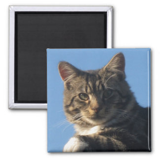 Tabby Cat - Square Magnet 5.1cm