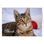Tabby Cat Thank You Card