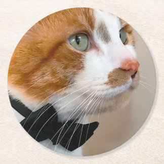 Tabby cat with bow tie round paper coaster