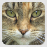 Tabby Cat with Green Eyes Portrait Sticker