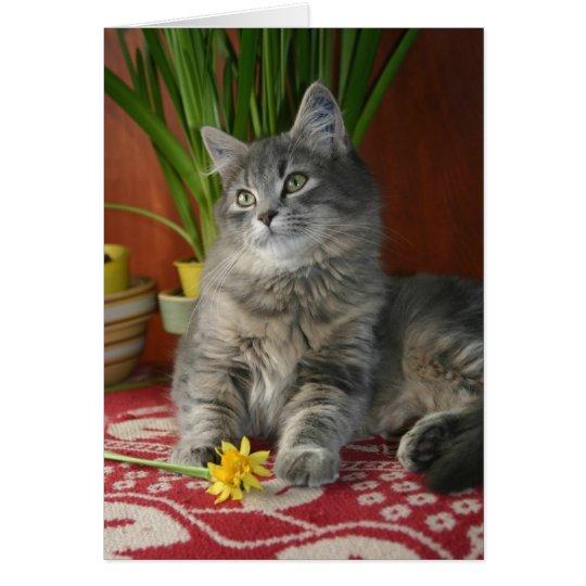 Tabby & Daffodils Notecard