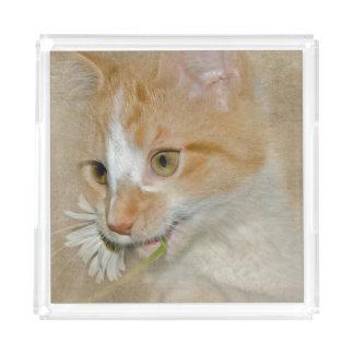 tabby gold cat with daisy acrylic tray