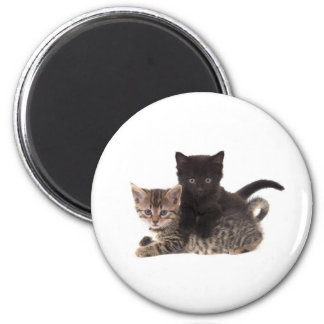 tabby kitten black kitten magnet