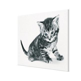 Tabby Kitten Canvas Print