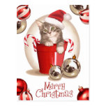 Tabby Kitten Christmas Post Cards