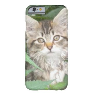 Tabby Kitten iPhone 6 case