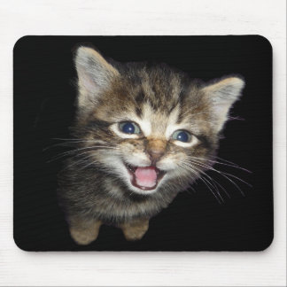 Tabby Kitten Mouse Pad
