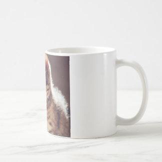 Tabby Kitten Coffee Mugs