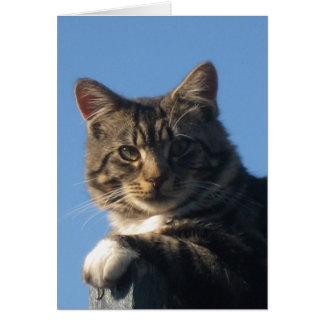 Tabby Kitten - Note Card