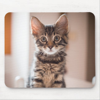 Tabby Kitten on the Table Mouse Mat