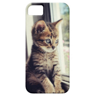 Tabby Kitten Watching iPhone 5 Cover