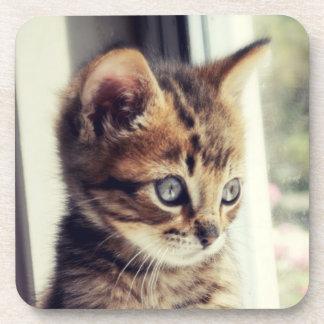 Tabby Kitten Watching Out Window Coaster