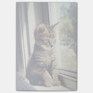 Tabby Kitten Watching Out Window Post-it Notes