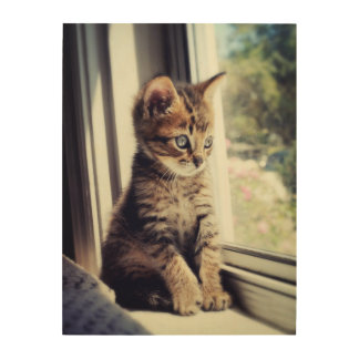 Tabby Kitten Watching Out Window Wood Canvases
