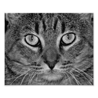 Tabby Love Photo Print