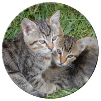"""Tabby Sisters 10.75"""" Decorative Porcelain Plate"""