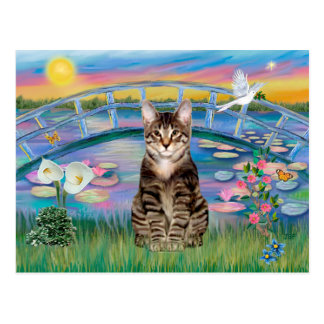 Tabby Tiger Cat - Sunrise Lilies Postcard