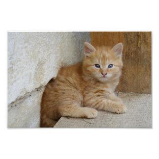 Tabby Tomcat Kitten Art Photo