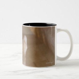 Tabby Two-Tone Coffee Mug