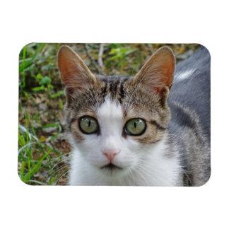 """Tabby/White Cat 3""""x4"""" Magnet"""