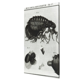 Table IV of Flies and Fleas Canvas Print